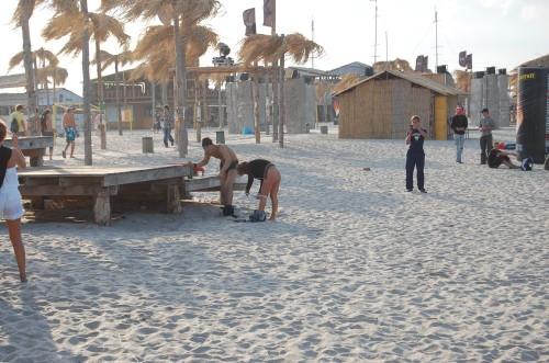 des cochons se rhabillent à la plage