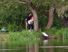 une levrette au bord de l'eau